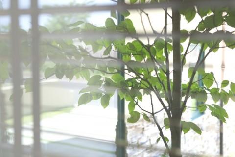 窓から見える広い庭
